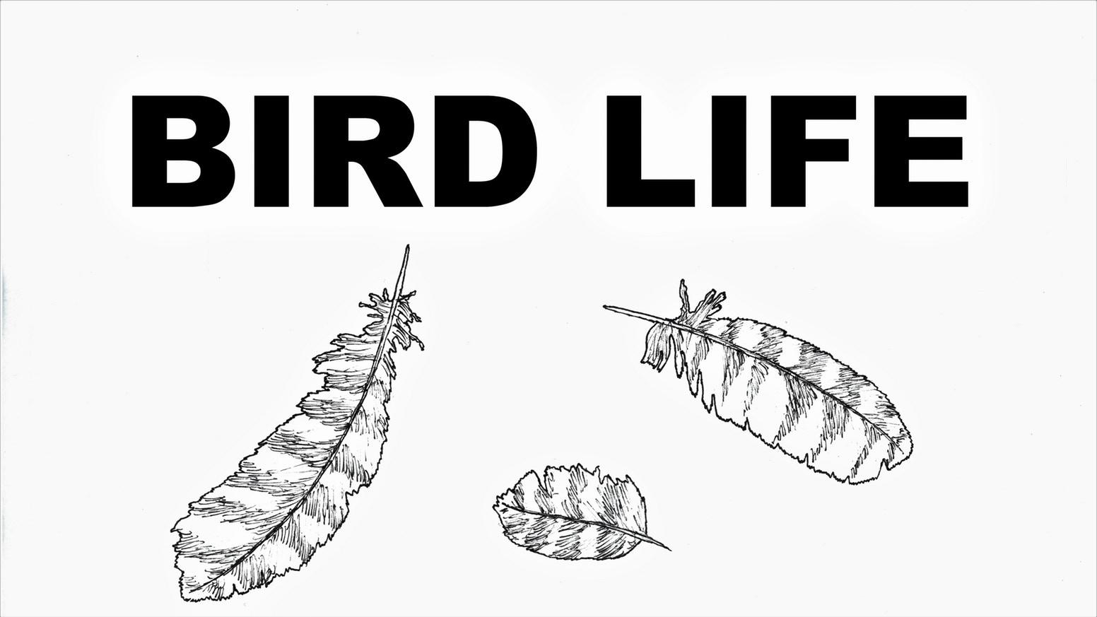 SC Presents: Bird Life